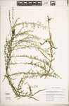 205df011 6fe8 432d 91cd ebc7e26f983b?file=thumbnail