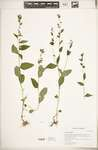 5bf339f7 5bcb 47d0 be4a 89a931de3151?file=thumbnail