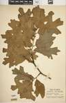 Download the full-sized image of IND-0063530-full.jpg