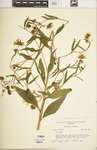 C534ft429?file=thumbnail